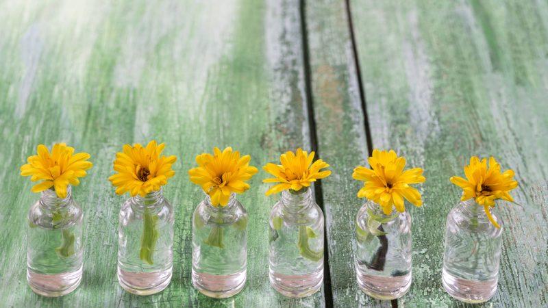 Vendo consciência em frascos com flores
